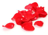 Petals of scarlet roses — Stockfoto
