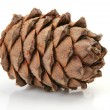 Stock Photo: pine nut&quot