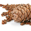 Stock Photo: Pine nut