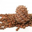 Pine nut — Stock Photo