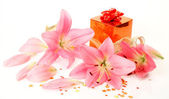 Pink lilies and box — Stock Photo