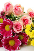 Fina blommor — Stockfoto