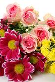 Jemné květiny — Stock fotografie