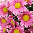 Pink flowers — Stock Photo #18960727