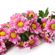 Pink flowers — Stock Photo #18960761