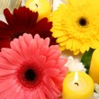 Fine flowers and candles — Stockfoto