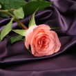 Pink rose — Stock Photo #24236885