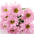 Pink flowers — Stock Photo #24239205
