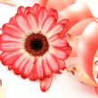 Pink flower — Stock Photo #24239663