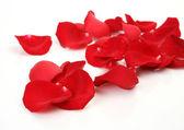 Kronblad röda rosor — Stockfoto