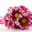 Pink flowers  — Stock Photo #24240093