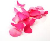 Petals of fine roses — Stock Photo