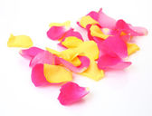 Petals of color roses — Stock Photo