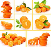 Collage from ripe oranges and tangerines — Stock Photo