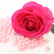 Pink rose — Stock Photo #29739031