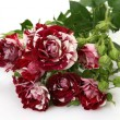 Bouquet of roses — Stock Photo #31048137