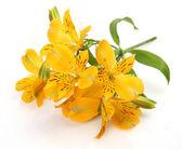 Gula blommor — Stockfoto