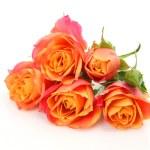 Fine roses — Stock Photo #34680565