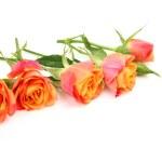 Fine roses — Stock Photo #34680569