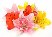 Fine lilies — Stock Photo