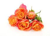 Fine roses — Stock Photo
