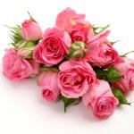 Fine roses — Stock Photo #35579341