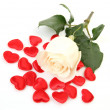 Stock Photo: Fine rose and scarlet hearts