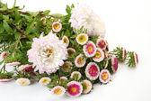 Bouquet of colors — Stock Photo