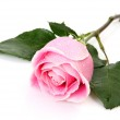Pink rose — Stock Photo #39074847