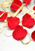 Petals of roses — Stock Photo