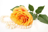 Fine rose — ストック写真