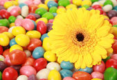 Tasty sweets and flower — Stock Photo
