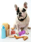 Dog and toilet accessories — Stock Photo