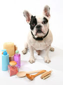 Dog and toilet accessories — Foto Stock