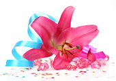 Pink lily and streamer — Stock Photo