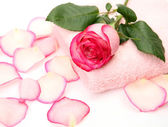 Towel and rose — Stock Photo