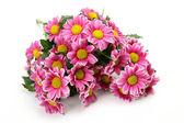 粉色的花 — 图库照片