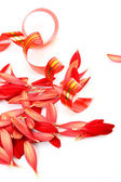 Streamer and petals — Stock Photo