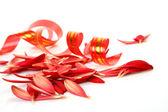 Streamer och kronblad — Stockfoto