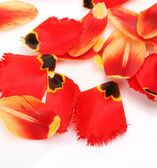 Petals of tulips — Stock Photo