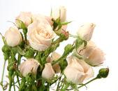 Bukett av rosor — Stockfoto