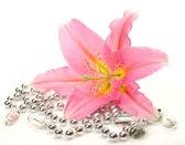 Roze lily — Stockfoto