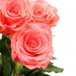 Pink roses — Stock Photo #46112281