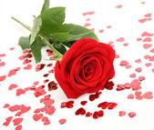 Szkarłatna róża — Zdjęcie stockowe