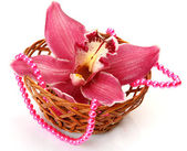 Fine orchid — Stock Photo
