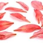 pétalos de rosas lirios — Foto de Stock   #50556843