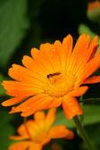 Voar em flor — Foto Stock