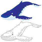 Garb backed wieloryb — Zdjęcie stockowe