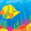 The yellow-green fish swims over the colorful coral reef — Stock Photo