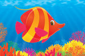 Striped fish swimming over a colorful coral reef — Stock Photo